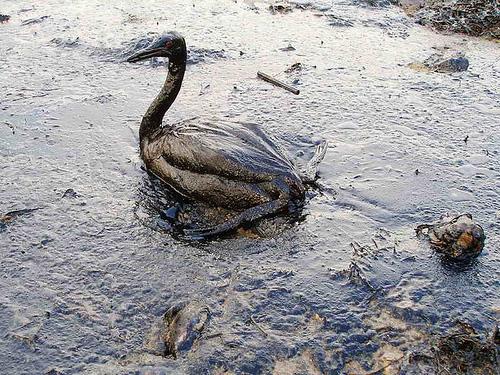 рисунки загрязнение: